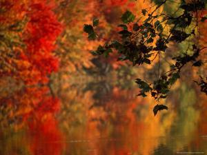 Brilliant Fall Colors Reflect on Water by Brian Gordon Green