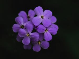 Close Up of a Cluster of Purple Flowers by Brian Gordon Green