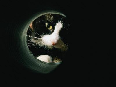 Close View of a Cat Looking Through a Tunnel