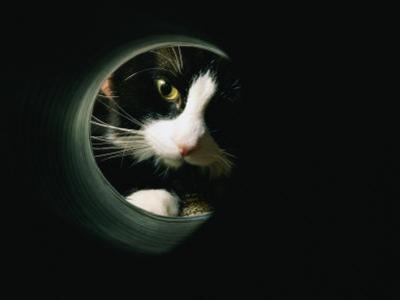 Close View of a Cat Looking Through a Tunnel by Brian Gordon Green