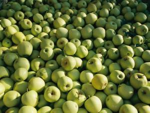 Green Apples are Piled High by Brian Gordon Green