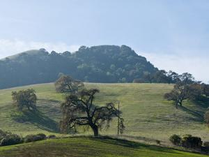 Landscape of Grassy Rolling Hills and Trees by Brian Gordon Green