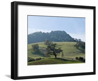 Landscape of Grassy Rolling Hills and Trees