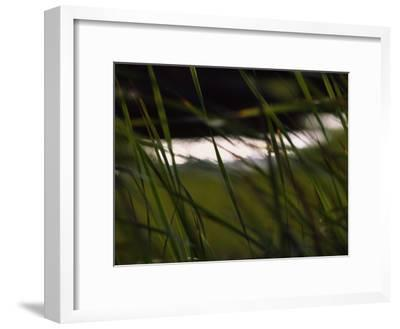 Marsh Grasses Sway in the Breeze with Water in the Background