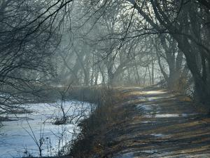Misty View Looking South on the C&O Canal by Brian Gordon Green