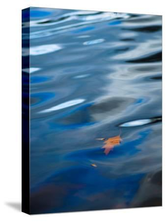 Oak Leaf Floating in Gently Rippled Water