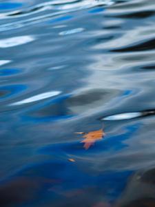 Oak Leaf Floating in Gently Rippled Water by Brian Gordon Green