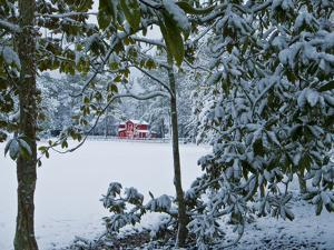Snowy Landscape with a Red Barn and Magnolia Trees by Brian Gordon Green