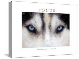 Focus - Concentration Is The Secret Of Strength by Brian Horisk