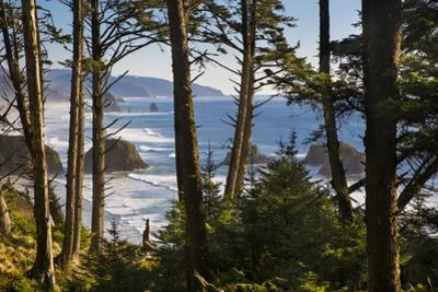 Coastline at Cannon Beach, Viewed Through the Trees, Ecola SP, Oregon by Brian Jannsen
