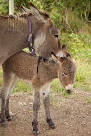 Donkey Mother and Foal by Brian Jannsen