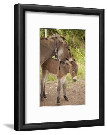 Donkey Mother and Foal