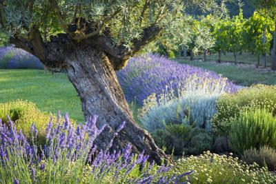 Evening Sunlight in French Garden in the Lot Valley, Midi-Pyrenees, France by Brian Jannsen