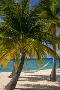 Palm Trees and Hammock at Seven Mile Beach, Grand Cayman, West Indies by Brian Jannsen