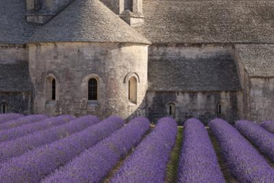 Rows of Lavender, Abbaye De Senanque, Gordes, Luberon, Provence, France by Brian Jannsen