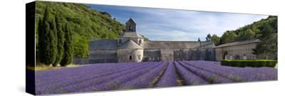 Rows of Lavender, Abbaye De Senanque Near Gordes, Luberon, Provence, France