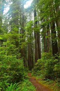 Hiking Trail II by Brian Moore