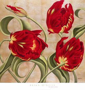 Scarlet Arabesque by Brian O'neill