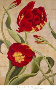 Tulip Tango I by Brian O'neill