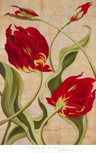 Tulip Tango II by Brian O'neill