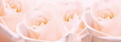 Bridal Bouquet of Pale Pink Roses--Art Print