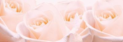 Bridal Bouquet of Pale Pink Roses