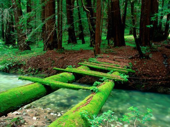 Bridge Covered in Moss over Little Sur River-Douglas Steakley-Photographic Print
