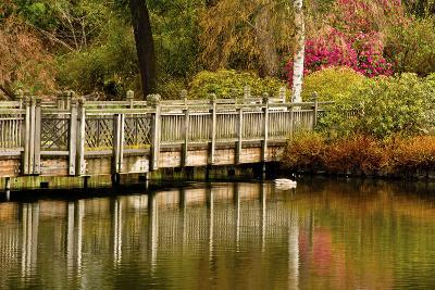Bridge, Crystal Springs Lake, Rhododendron Garden, Portland, Oregon-Michel Hersen-Photographic Print