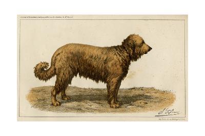 Brie Shepherd Dog at 1863 Paris Dog Show--Giclee Print