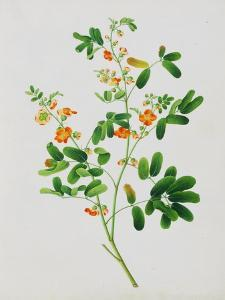 Bright Orange Flowers with Oval Green Leaves