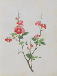 Bright Red Flowers, Thorns and Small Leaves