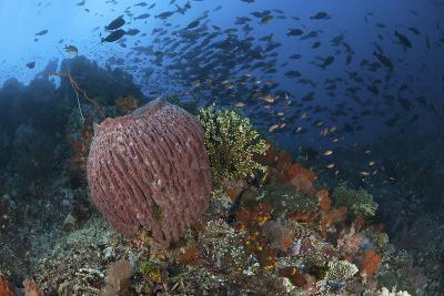 Bright Sponges, Soft Corals and Crinoids in a Colorful Komodo Seascape-Stocktrek Images-Photographic Print