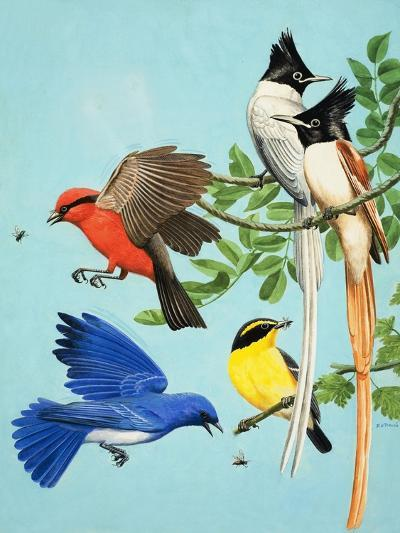 Brightly Coloured Birds-R. B. Davis-Giclee Print