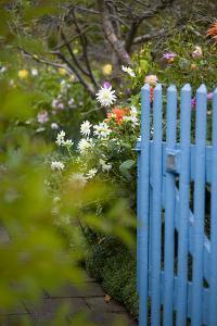 Blue Wooden Door in the Allotment Garden by Brigitte Protzel