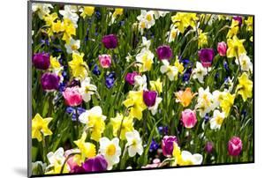 Flowerbed with Spring Flowers by Brigitte Protzel