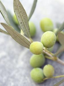 Olive Sprig with Green Olives by Brigitte Sporrer
