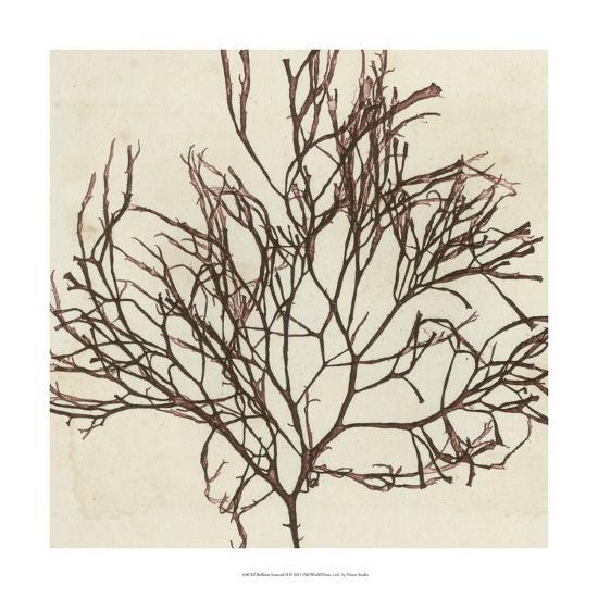 Brilliant Seaweed II-Vision Studio-Art Print