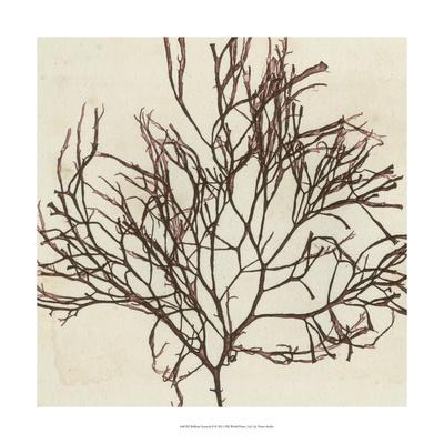 https://imgc.artprintimages.com/img/print/brilliant-seaweed-ii_u-l-pxn19y0.jpg?p=0