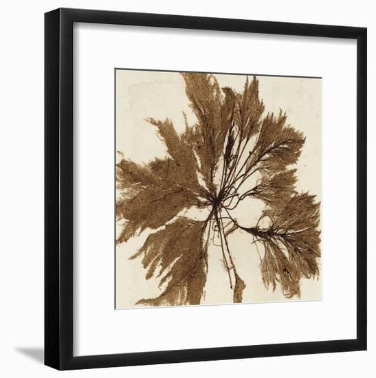Brilliant Seaweed VI--Framed Art Print