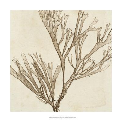 Brilliant Seaweed VII--Art Print