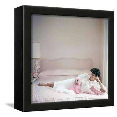 British Actress Joan Collins In A Pink Bedroom With A Pink Toy Poodle Photo Photo Art Com
