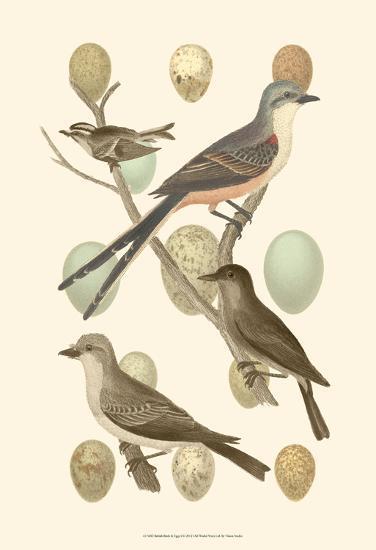 British Birds and Eggs I--Art Print