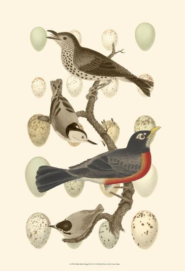 British Birds and Eggs III--Art Print