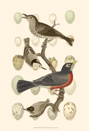 British Birds and Eggs III