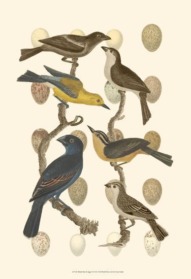 British Birds and Eggs IV--Art Print