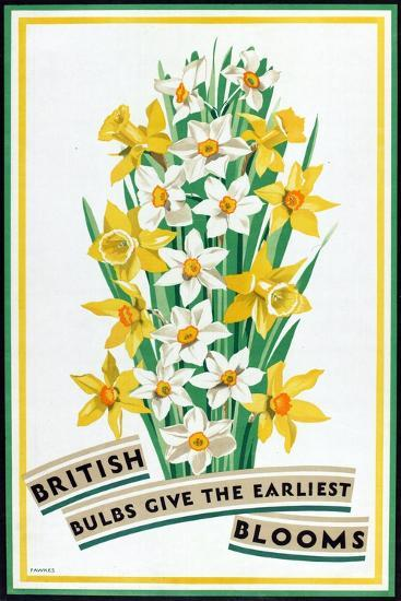 British Bulbs Give the Earliest Blooms, from the Series 'British Bulbs for Home Gardens'- Fawkes-Giclee Print