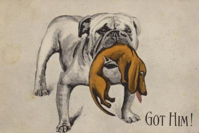 British Bulldog with Defeated German Dachshund in His Mouth