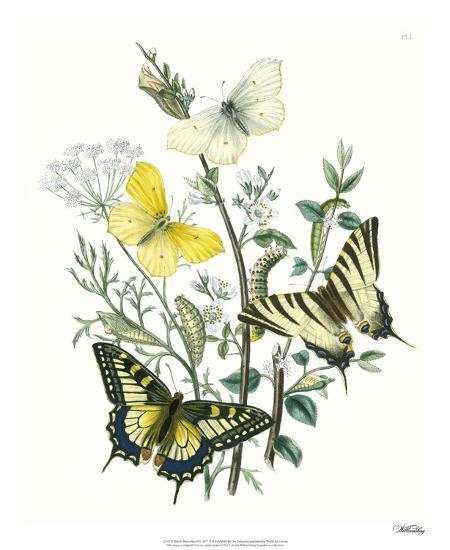 British Butterflies II-Unknown-Giclee Print