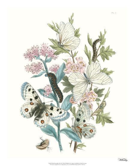 British Butterflies III-Unknown-Giclee Print