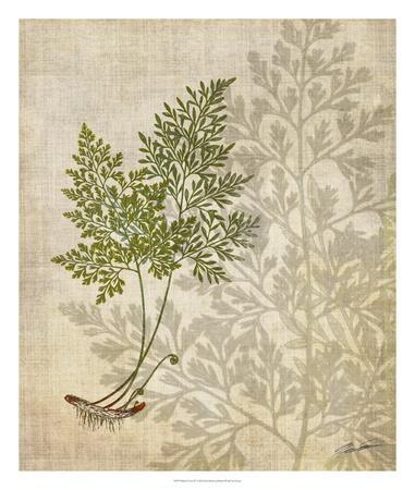 https://imgc.artprintimages.com/img/print/british-ferns-iv_u-l-f7wim70.jpg?p=0